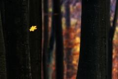 04_Krajobraz-Ostatni