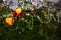 05_Martwa-natura-Szklarniane-impresje